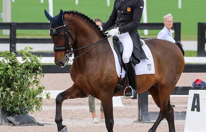 Three Horses Die in Wellington Barn Fire – Dressage-News